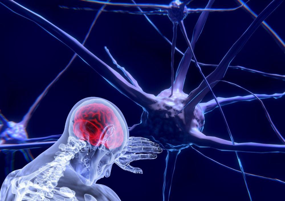 i neuroni nell'uomo