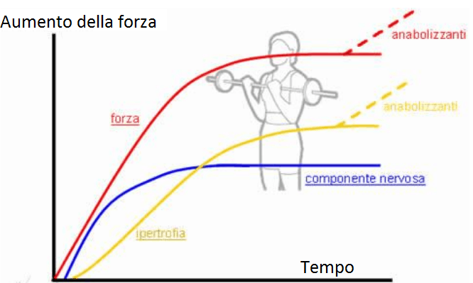grafico che mostra la relazione forza ed ipertrofia muscolare in funzione del tempo