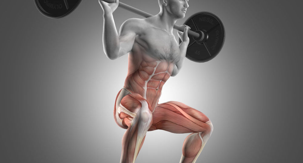 uomo che esegue squat con i muscoli attivati evidenziati