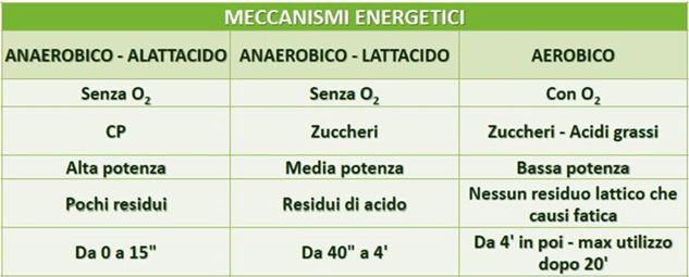 relazione substrati energetici e attività fisica