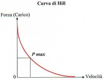la relazione tra forza e velocità