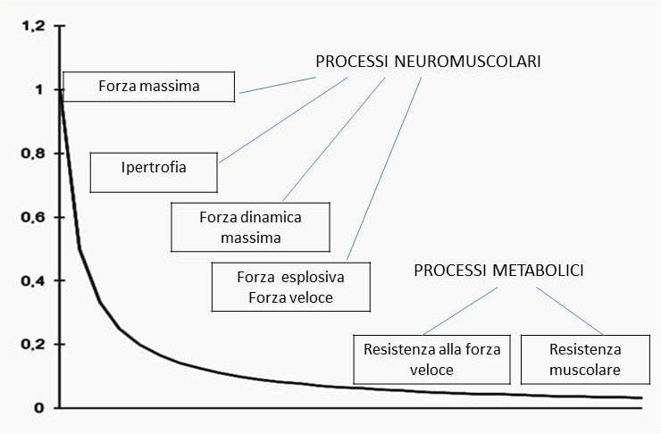 le qualità biomotorie posizionate sulla curva forza/velocità